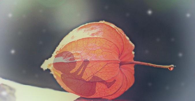 hand-snow-light-plant-photography-leaf-1161867-pxhere.com